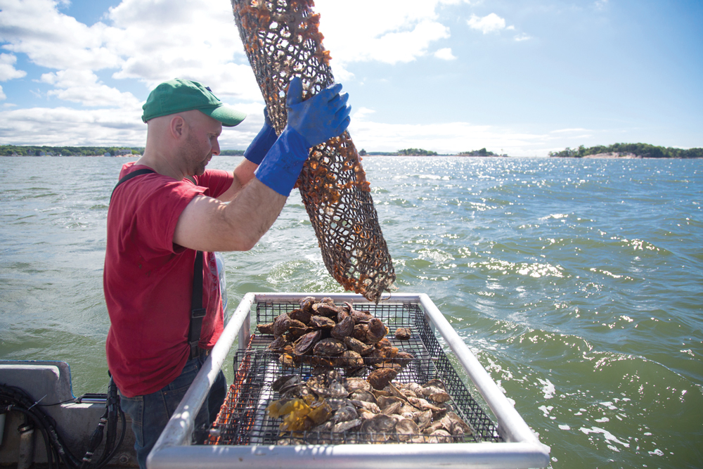 Ocean farming the wave of the future ink publications for Gordon fish sticks