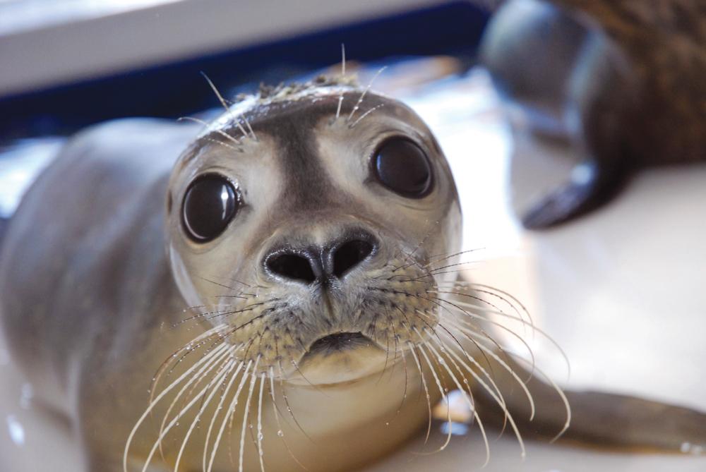 Mystic Aquarium Animal Rescue Program -Rocking the Seal World