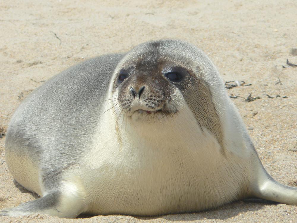 mystic aquarium animal rescue program rocking the seal world