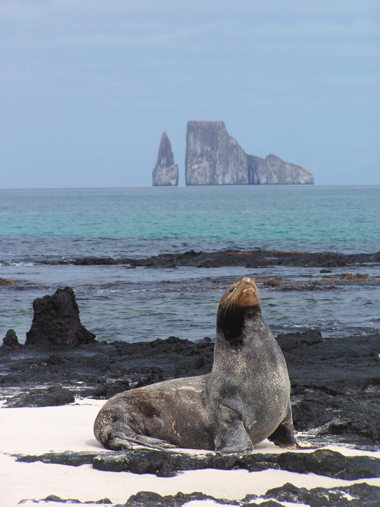 Bucket List Explore The Galapagos Islands In Style With