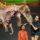 Erth's Dinosaur Zoo Live - Jorgensen Center