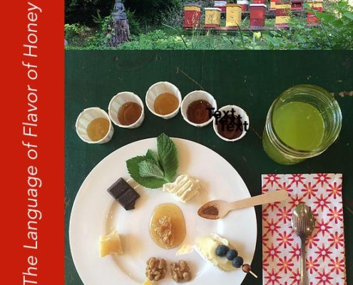 Guided Sensory Honey Tasting Event
