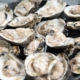 Oyster Feed